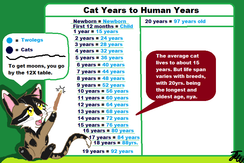 Warrior Cat Age System